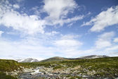 Tundra in Dovrefjell National Park, Norway — Stock Photo