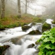Stream in a beech forest in the fog, Asturias, Spain. — Stock Photo