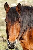 Brown horse head — Стоковое фото