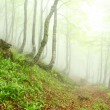 Spring beech forest in the fog, Asturias. Spain. — Stock Photo