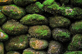 Texture Of Huge Stone Covered With Fresh Green Moss — 图库照片