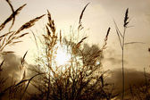 Wild grass in the setting sun. — Stock Photo