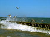 Baltské moře. — Stock fotografie