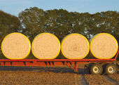 Round Cotton Modules Loaded on Flatbed — Stock Photo