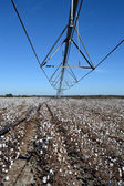 Pivot Over Cotton Ready to be Picked — Stock Photo