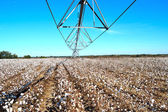 Landscape Pivot in Center over Cotton Field Ready for Harvest — Stock Photo