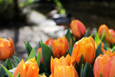 Colorful Keukenhof garden — ストック写真
