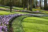 Colorful Keukenhof garden — Foto de Stock