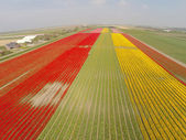 Aerial view on tulip fields in Holland — Stock Photo