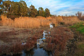Reeds and lake in the spring — Stock Photo