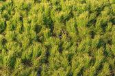 Green tree leaves background — 图库照片