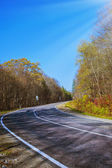Paved road in a sunny forest — Stock Photo
