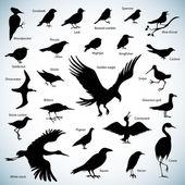 Birds silhouettes — Stock Vector