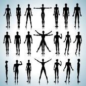 Anatomy silhouettes — Stock Vector