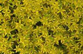 Yellow Bloom — Stock Photo