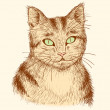 Portrait of tabby cat — Image vectorielle