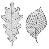 Vector Collection of Leaf Silhouettes with thin veins. Oak and elm leaves. Leaves sketch. — Stock Vector