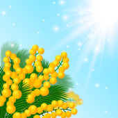 Mimosa flowers. — Stock Vector