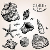 Hand drawn collection of various seashell illustrations. — Stock Vector