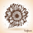 Sunflower in vintage style. — Stock Vector #50411495