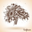 Sunflower in vintage style. — Stock Vector #50411583