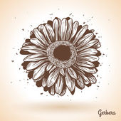Hand drawn gerbera flower. — ストックベクタ
