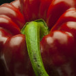 Red-bell-pepper — Stock Photo