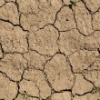 Dried & cracked earth — Stock Photo