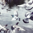 Stock Photo: Flock of pigeons scattering