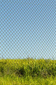 Chain link fence, tall grass — Stock Photo