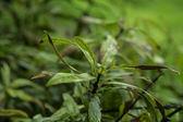 Plant life — Stock Photo