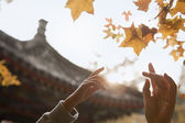 Human hands reaching for a leaf in the autumn — Stock Photo