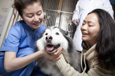 Woman with pet dog and veterinarian — Stock Photo