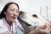 Chien dans le bureau du vétérinaire — Photo