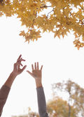Couple Reaching for Gingko Leaves — Stock Photo