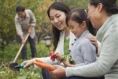 Family harvesting vegetables in garden — Stock Photo