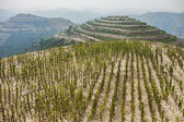 Terraced fields on the hillside — Stock Photo