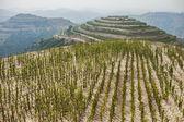 Terraced fields on the hillside — Stock Photo