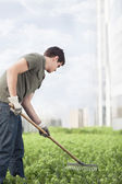Man gardening green plants — Stock Photo