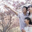 Family admiring the cherry blossoms — Stock Photo #36654369