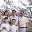 Family amongst the cherry trees — Stock Photo