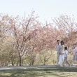 Family taking a walk amongst the cherry trees — Stock Photo #36657871