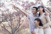 Family admiring the cherry blossoms — Stock Photo