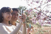 Couple taking a photograph of cherry blossoms — Stock Photo
