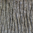 Stock Photo: Skinned palm tree trunk - background