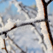 Twig in snow — Stock Photo