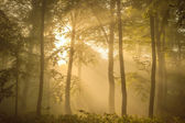 Sunlit forest in the morning — Stock Photo