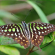 Stock Photo: Butterfly