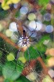 Spiders — Stock Photo