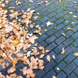 Stock Photo: Leaves on pavement